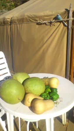 légumes Aude et Tarn 1